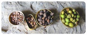 生の果実、乾燥させた果実、果実の中にある木の実、木の実を割った殻と胚。