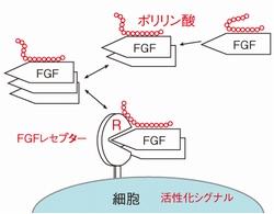 長鎖ポリリン酸