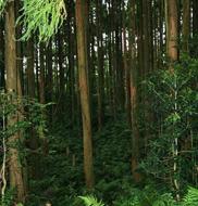 間伐が遅れ、光の入らない林内