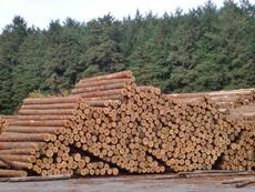 間伐材は様々な製品となって流通されます