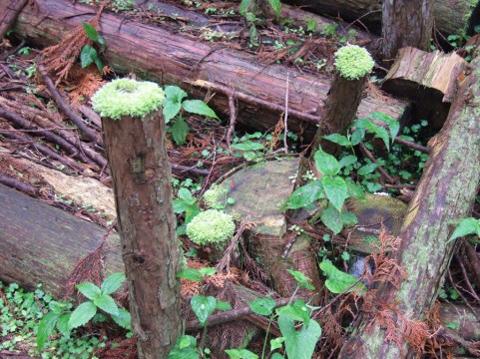 薄れつつある森林との関わり